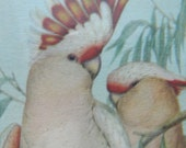 Gould framed art , pair of cockatoos, pink shabby chic decor