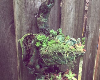 Mafe to order. Tear drop. Driftwood succulent vertical garden sculpture