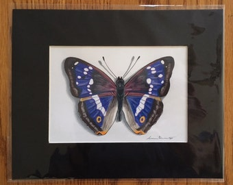 Hand Drawn Purple Emperor Butterfly 8 x 10