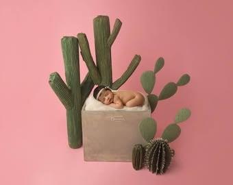 "Digital Backdrop- ""Boho Babe""- Newborn Prop - Bohemian Cactus"