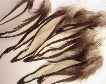 12 Laced Feathers,   Natural Laced Hen Loose Feather: 4 inches plus