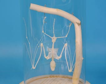 Real bat skeleton mounted in glass dome,Cool gift