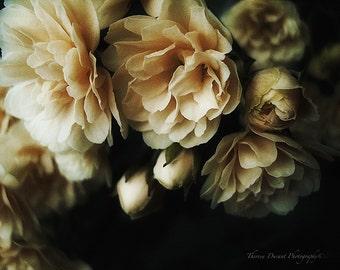 Fine Art Photography- Rose Photography- Flower Photography- Home Décor photography- Nature Photography- Floral Print- Rose Print-