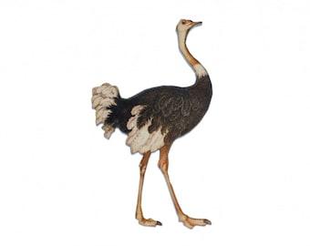 Strauss Laserprint LC Brooch pin Miniblings wooden animal Australia Bird