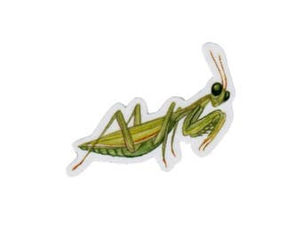 Praying Mantis Magnet / Insect Collection / Nature Art / Refrigerator Magnet / Office Magnet / Party Favor / Small Gift