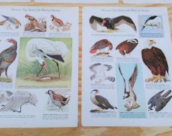 Vintage Bird Prints - Womans Day Guide to Bird of America - 5 Bird Prints