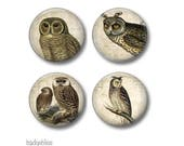 Owl fridge magnets or pinback button badges, fridge magnet set