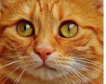 Orange tabby cat cross stitch pattern chart, modern cross stitch, colorful pattern, jpeg pattern, needlecraft pattern, kitten chart, orange
