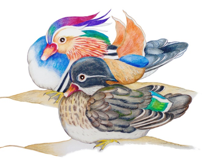 LIMITED EDITION Mandarin Ducks, Feng Shui Symbol of Love Loyality, Art Print Authenticity, Feng Shui Says Mandarin Duck Attract Love