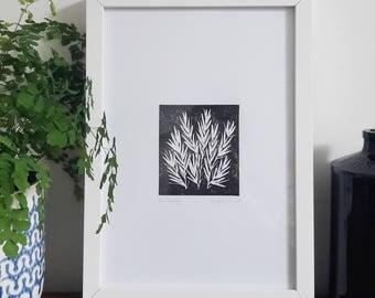 Rosemary Lino Print