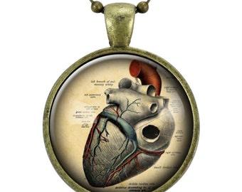 Anatomical Heart Necklace, Anatomy Jewelry, Goth Pendant (1125B25MMBC)