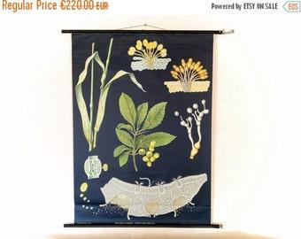 VENTA tabla de pared botánico, mediados de siglo modernos cuadros, cartel científico, moho del trigo, mapa Vintage alemán escuela, Jung Koch Quentell