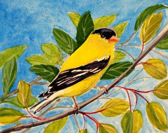Goldfinch original yellow bird on branches goldfinch watercolor blue sky background