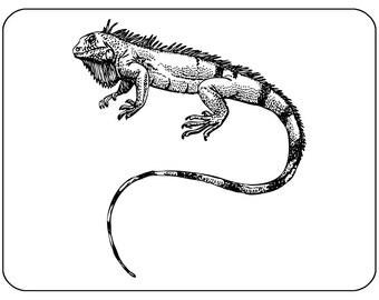Iguana Lizard - Mouse Mat Mouse Pad