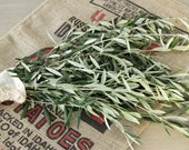 Olive Branches- 8-10 stem bunches