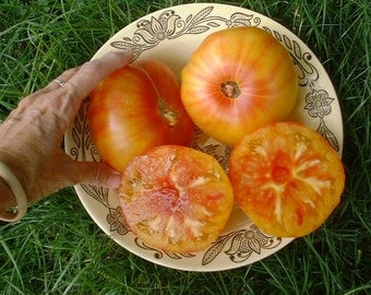 VTH) PINEAPPLE TOMATO~Seeds!!~~~~~So Sweet Heirloom!