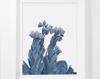 Succulent Photography, Framed Plants, Framed Botanical Prints, Succulent Art Print, Botanical Art Prints, Framed Art Work, Frame