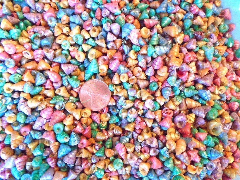 250 mini pastel dyed venetian cone trochus mix seashells crafts 329 shipping reviewsmspy