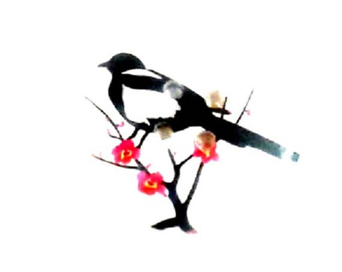 50mm button featuring a black and white bird on a branch now