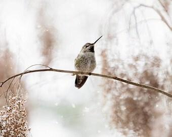 Winter Birds, Hummingbird Print, Snow, Hummingbird Decor, Winter, Humming Bird, Bird Photography, Hummer, Wildlife Photography, Ocean Spray