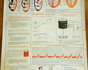 The Work of the Heart Anatomy Chart Poster Decor Art by The Sargent-Welch Scientific Co