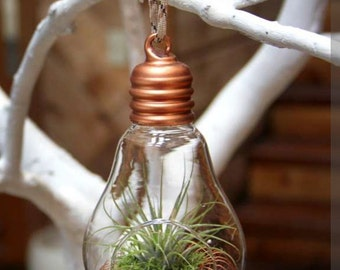 Copper Light of Life Hanging Glass Light Bulb Terrarium with Living Air Plant