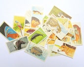 Vanishing Wildlife Brooke Bond tea cards: pack of 30 collector cards from 1978. Vintage ephemera for scrapbooks, collage, journal OT554A