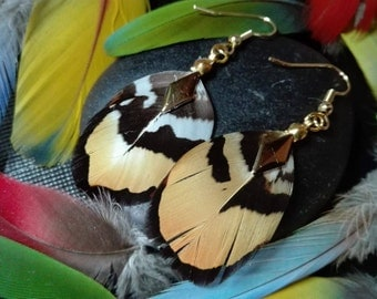 Real Golden pheasant feather earrings.