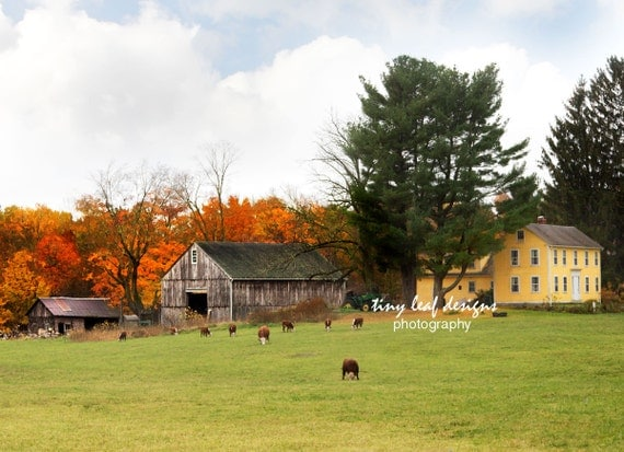 Stevenson Farm in the Fall - Sutton, MA Original Photography