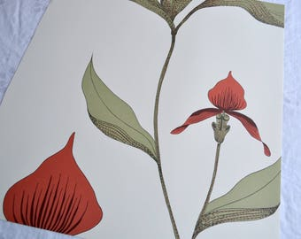 Wallpaper - Cole and Son  Sample Sheet  - 19 x 17  Red Orchid