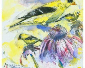 Original bird art, American Goldfinch, 10 x 10, unframed.