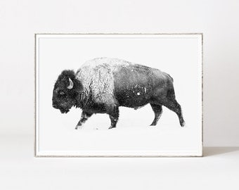 Buffalo, buffalo print, bison wall art, bison, black and white buffalo, buffalos, american buffalo, american art, animal prints, bull print