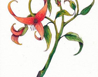 Flower [flower]