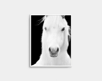 Horse Photo, Printable Art, Horse Art Print, White Horse Print, Black And White Horse, White Horse, Wall Decor, Wall Art, digital Download
