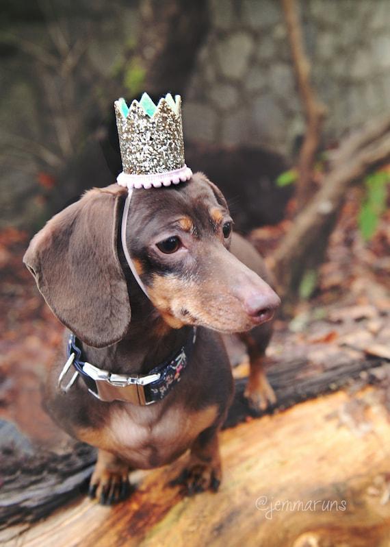 Dog Hat || Dog Birthday || Pet Birthday || Crown || Cat Birthday Crown Hat || Animal Birthday Hat
