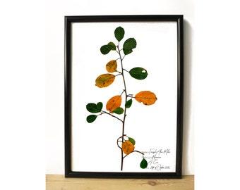 Tree print - Botanical print - Plant illustration - Botanical illustration - Herbarium art