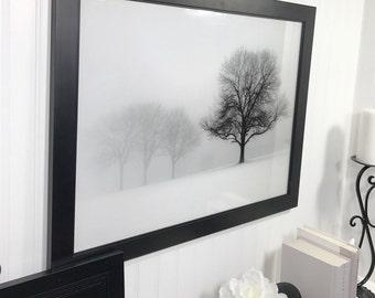 Framed Black and White Tree Print