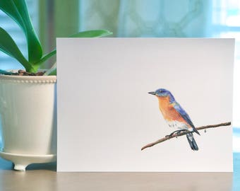 Eastern Bluebird Colored Pencil 8.5x11 Print