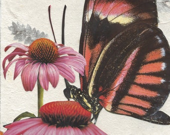 BUTTERFLY: Butterfly with Coneflowers
