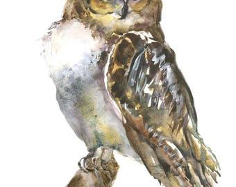 Great horned owl archival print-   owl art-  owl watercolor- original designs-  owl painting-   birders gift-  owl gift- great owl-