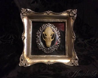 Real Taxidermy Bat Skull Mini Frame - Real Bat - Gothic Gift - Bat Gift - Gothic Decor - Halloween Decor - Bat Decoration - Mounted Bat