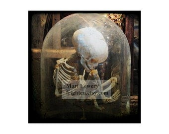 Halloween Decor, Child Skeleton with Middle Finger 5x5 Inch Photography Print, Macabre Oddity Small Wall Art Print