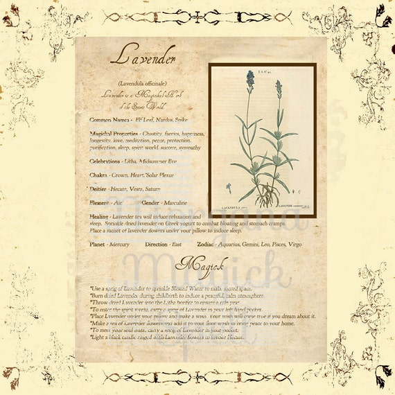 LAVENDER MAGICK HERB Digital Download, Book of Shadows, Grimoire, Scrapbook, Spells, White Magick, Wicca, Witchcraft, Herb Magic