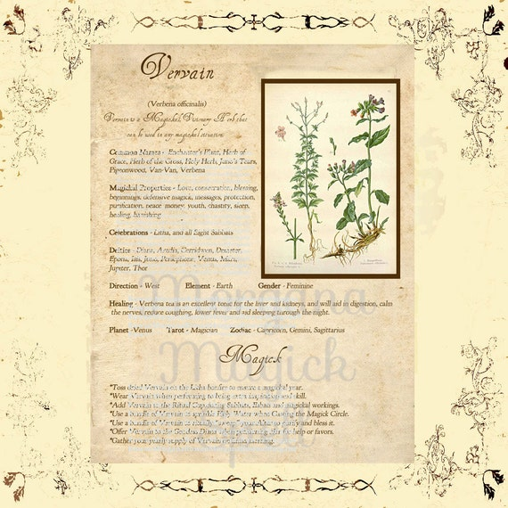 VERVAIN MAGICK HERB  Book of Shadows  Grimoire, Scrapbook, Spells, White Magick, Wicca, Witchcraft, Herb Magic