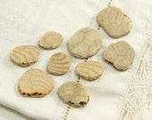 9 small fossilized sand dollar pieces with beautiful patterns (no.x3)