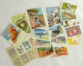 Vintage 1950's Wildlife Stamps Collection of 26 National Wildlife Federation Stamps 1954 and 1957 Wildlife Christmas Stamps