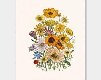 "Daisy Art Floral Print, Botanical Cottage Lake House Decor (Yellow Flower Print, Victorian Flower Illustration) ""Daisies"""