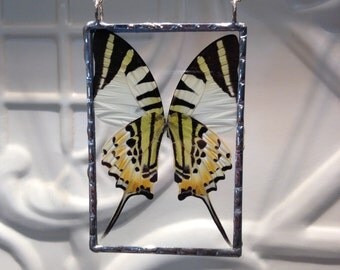 Five Bar Swordtail Butterfly - Real Butterfly Wings Soldered Pendant - Hand Soldered - Great Christmas Gift