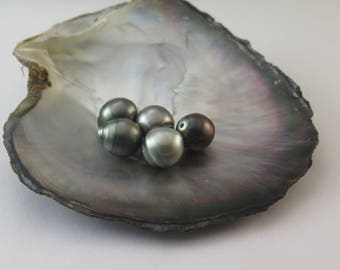 SAVE 10% // PACK Of 5 Circle Tahitian Black Pearls, Light, AA, Drilled to 1mm, Pearl size: 10.00-10.99mm, 20 Dollars a Pearl (#16)