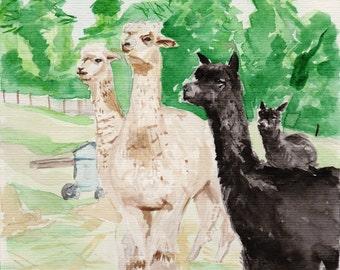 Watercolour Alpacas A4